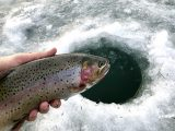Angler holds a cutthroat trout in front of a hole in the ice.